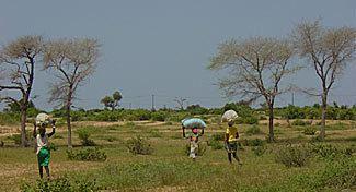 Ferlo Desert wwwplanetesenegalcomimagesferlochampsjpg