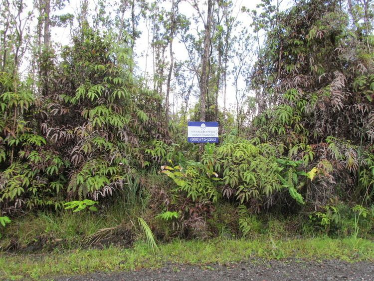 Fern Forest, Hawaii myeranchcomHawaiiphotos2011fernforestfernf