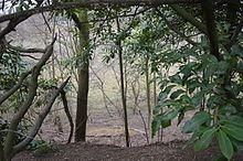 Fern House Gravel Pit httpsuploadwikimediaorgwikipediacommonsthu