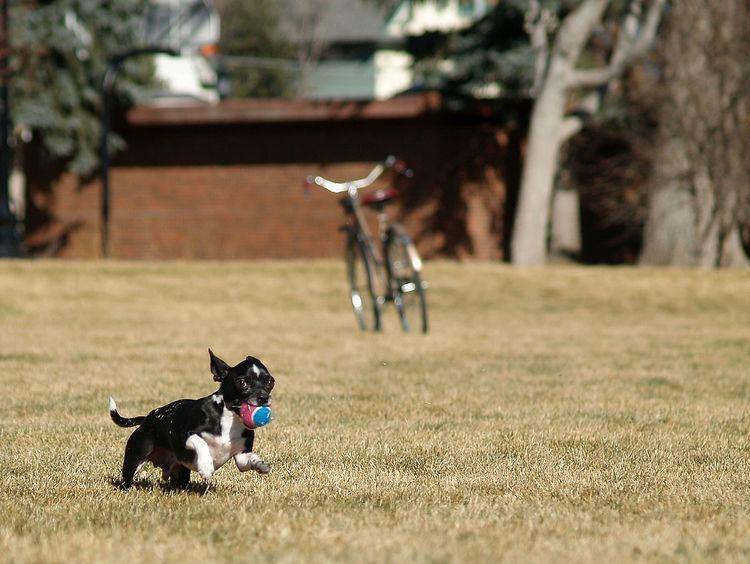 Fetch (game)