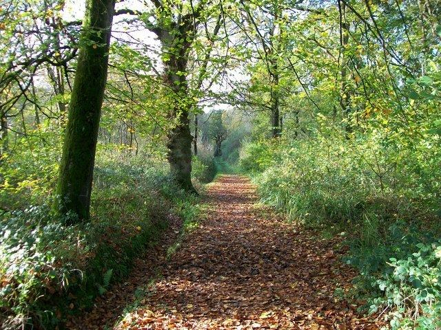 Fifehead Wood