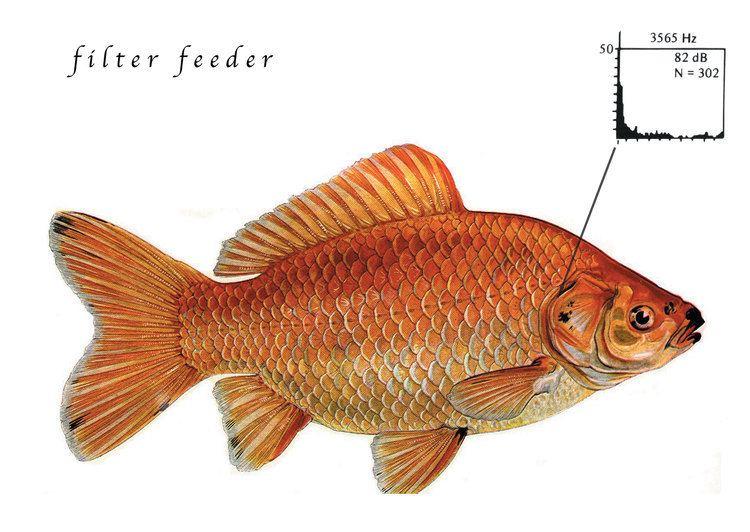 Filter feeder Filter Feeder Alex Davies