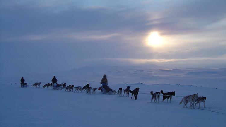 Finnmarksvidda Arctic adventure Skiing and dogsledding on the Finnmarksvidda