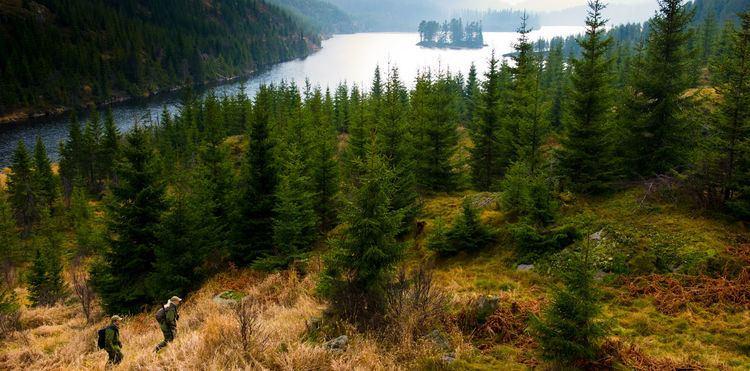 Finnskogen Norrona finnskogen Forest hunting Norrna