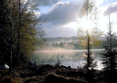 Finnskogen httpssmediacacheak0pinimgcomoriginals54