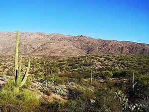First Battle of Tucson httpsuploadwikimediaorgwikipediacommonsthu