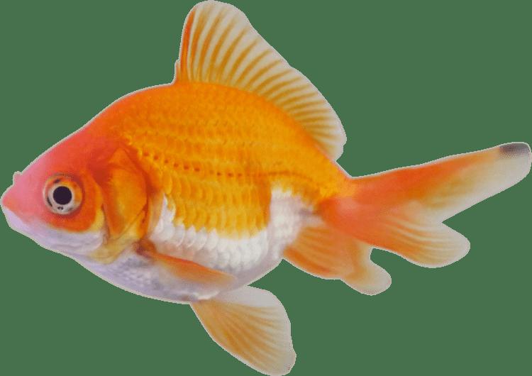 Fish Fish Lessons TES Teach