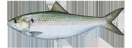 Fish Fishing and Boating Resources How to start fishing today Take Me