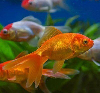 Fish s7d2scene7comisimagePetSmartARTHMBHowDoISet