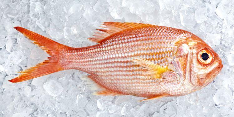 Fish as food ihuffpostcomgen2646102imagesoFISHfacebookjpg