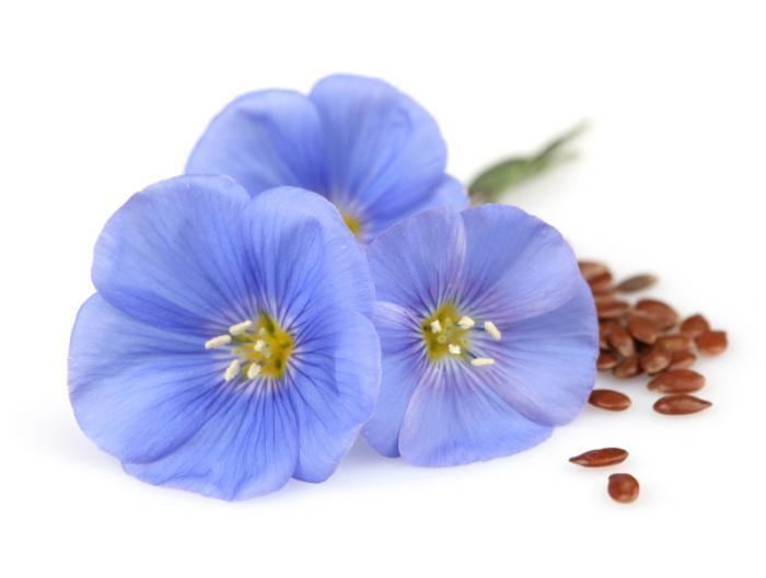 Flax Flaxseed Health Benefits Facts Research Medical News Today