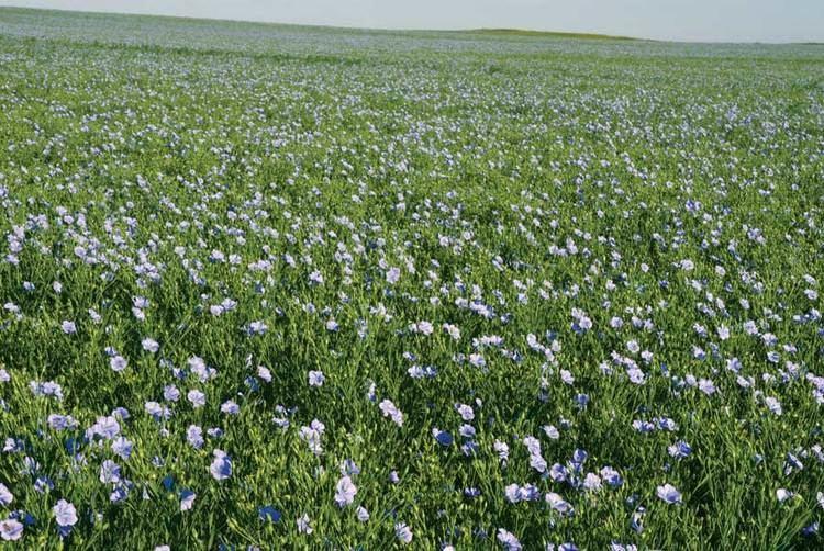 Flax FLAX STRAW 20kg Biohansa
