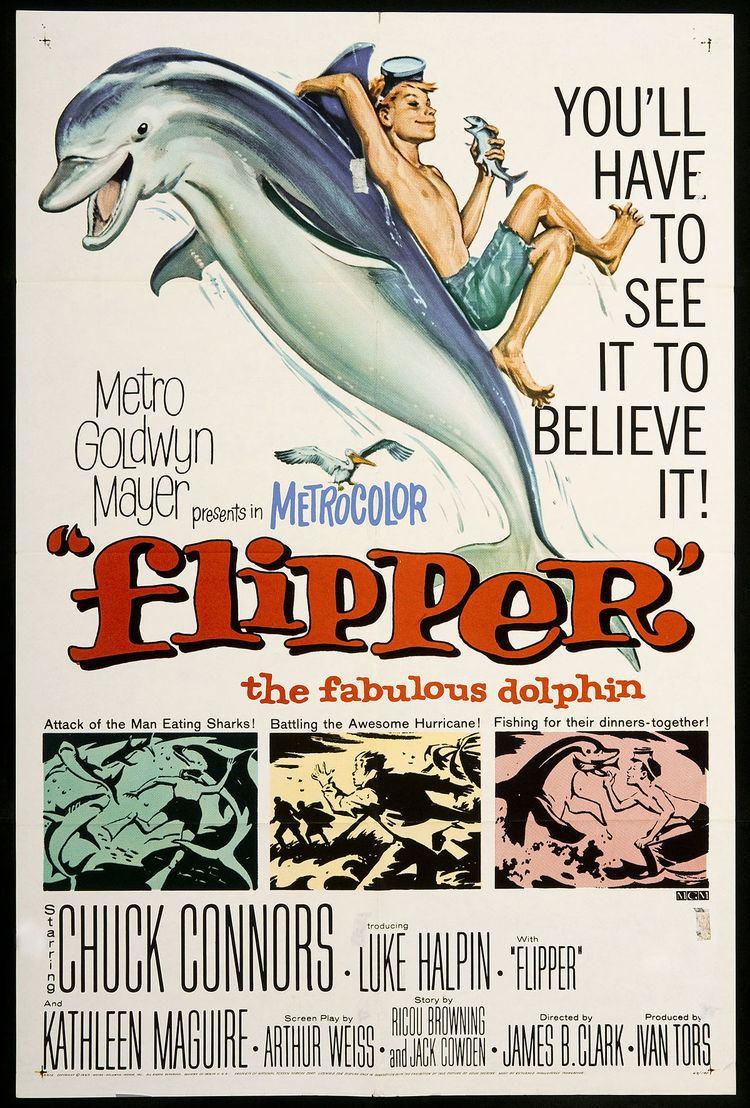 Flipper (1963 film) Flipper 1963 film Wikipedia