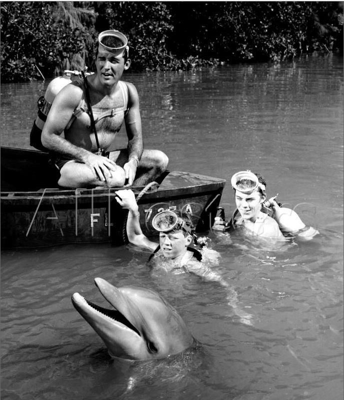 Flipper (1964 TV series) 1000 images about flipper tv show on Pinterest The 1960s
