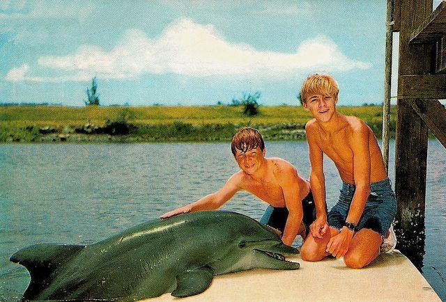 Flipper (1964 TV series) Flipper debuted in 1964 Miller Zell 50th Anniversary Pinterest