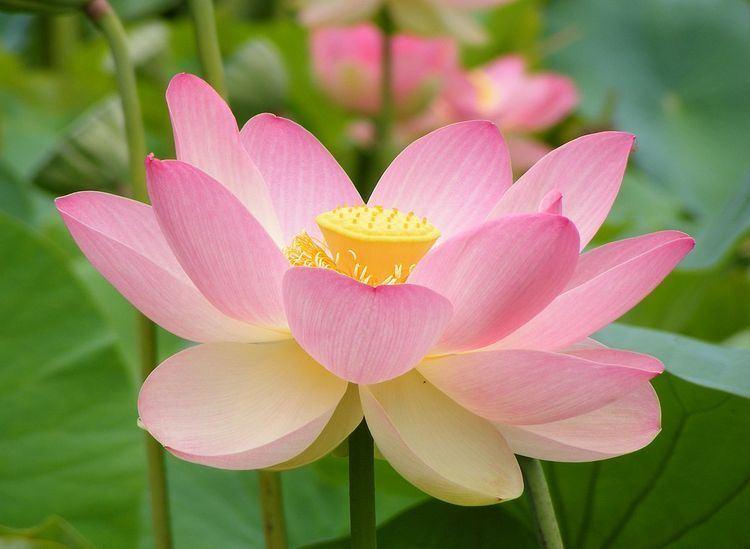 Flora of India