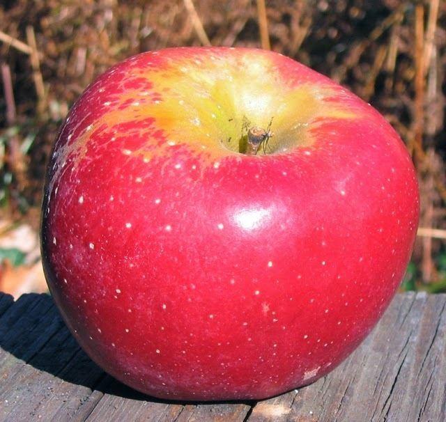 Florina (apple) 4bpblogspotcomeN1gl4uWs3wUogJDJpuJVIAAAAAAA