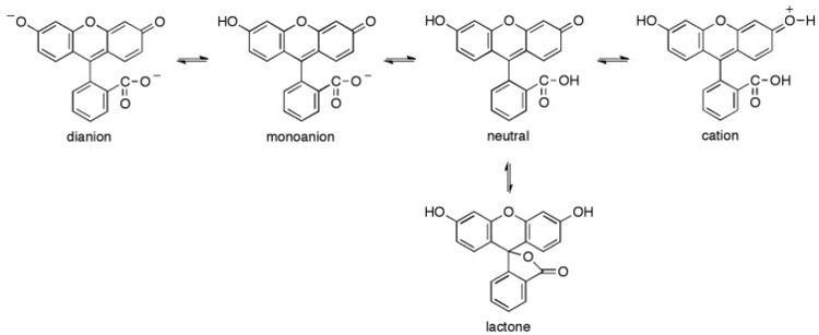 Fluorescein Ionization equilibria of fluorescein Figure 1 of 14