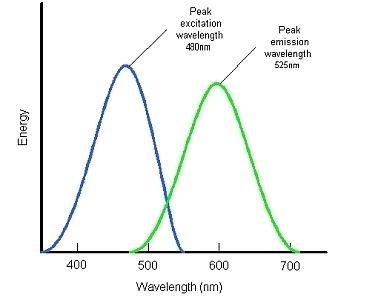 Fluorescein Fluorescein Fundamentals Ophthalmic Photographers39 Society