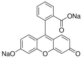 Fluorescein Fluorescein sodium salt used as fluorescent tracer SigmaAldrich