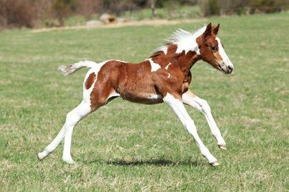 Foal Get Foal Nutrition Right From the Start TheHorsecom