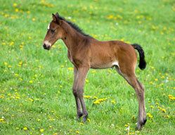 Foal Common Foal Problems