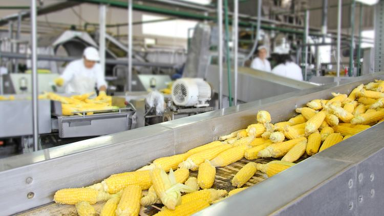 Food processing Dirty Secrets of The Food Processing Industry FOOD MATTERS