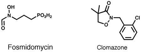 Fosmidomycin craneinhibitorsjpg