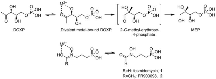 Fosmidomycin Molecules Free FullText Synthetic Fosmidomycin Analogues with