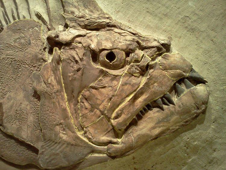 Fossil httpssmediacacheak0pinimgcomoriginals80