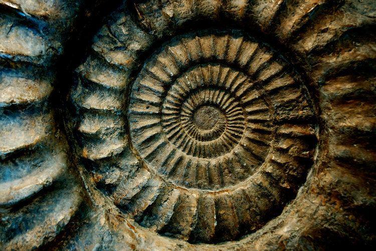 Fossil Fossils Dinosaur Bones Minerals amp Giftware in Drumheller AB