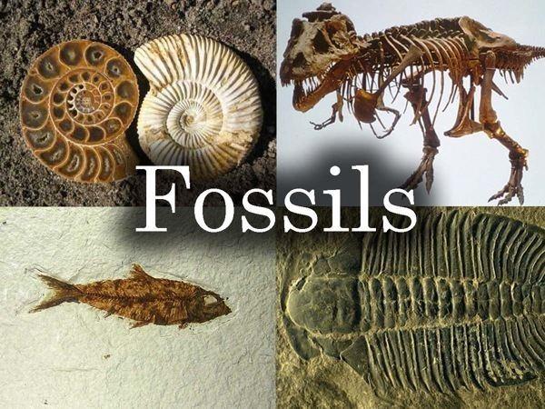 Fossil Fossils 3rd Grade By Laura Lamaster Lessons TES Teach