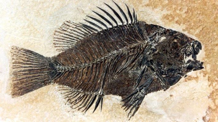 Fossil Fossils Science Interactive PBS LearningMedia