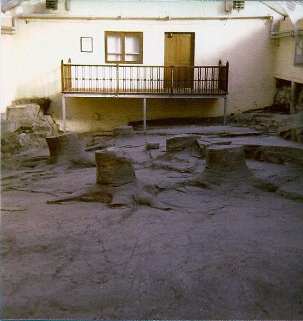 Fossil Grove