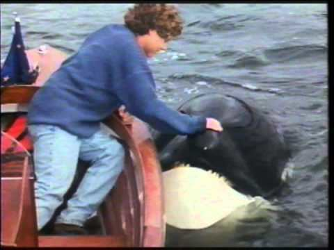 Free Willy 2: The Adventure Home Free Willy 2 The Adventure Home VHS Commercial 1995 YouTube