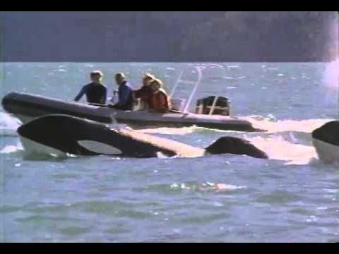 Free Willy 3: The Rescue Free Willy 3 The Rescue Trailer 1997 YouTube