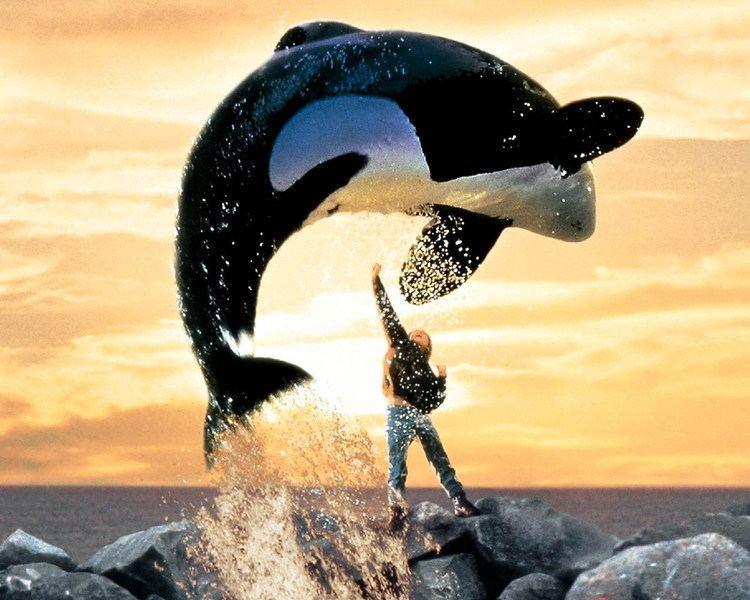 Free Willy Movies in Marana Free Willy Town of Marana