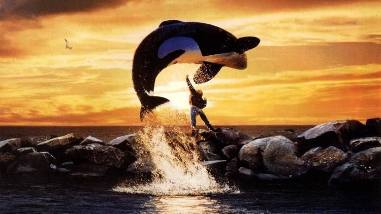 Free Willy The Free Willy