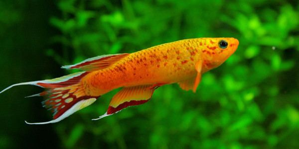 Freshwater fish 10 Most Colorful Freshwater Fish The Aquarium Guide