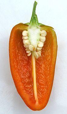 'Fresno Chili' pepper httpsuploadwikimediaorgwikipediacommonsthu