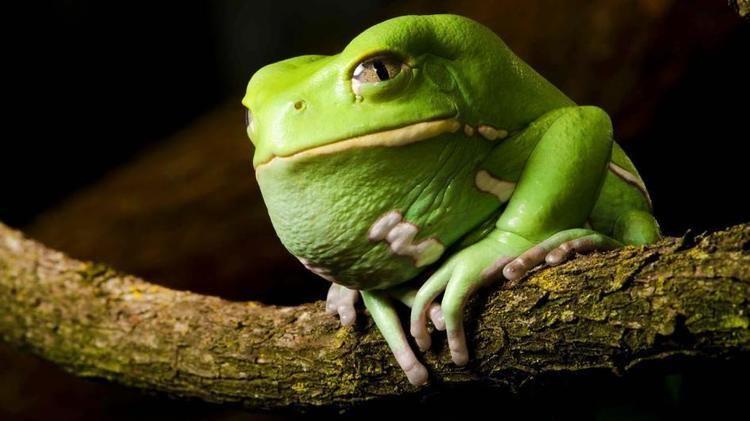Frog Wacky Weekend Frogs