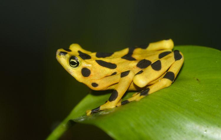 Frog httpsuploadwikimediaorgwikipediacommons55