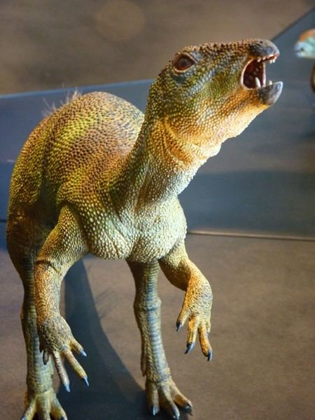 Fruitadens Fruitadens Pictures amp Facts The Dinosaur Database