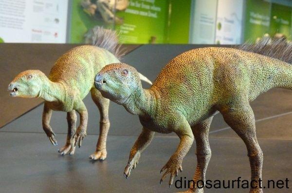 Fruitadens Fruitadens dinosaur