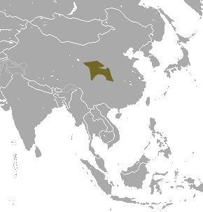 Gansu mole httpsuploadwikimediaorgwikipediacommons55