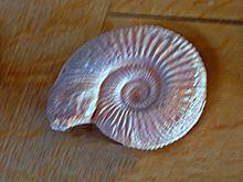 Garantiana httpsuploadwikimediaorgwikipediacommonsthu