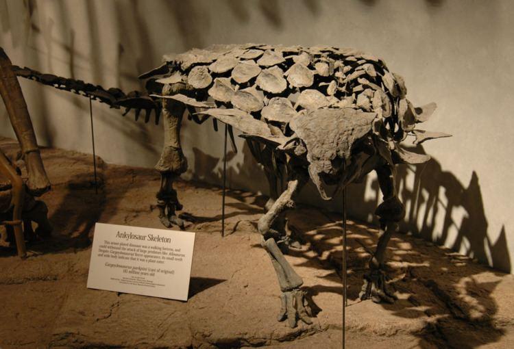 Gargoyleosaurus Gargoyleosaurus Wikipedia