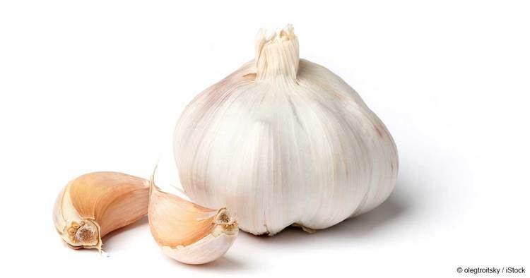 Garlic What Is Garlic Good For Mercolacom