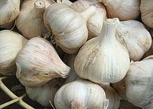 Garlic Garlic Wikipedia