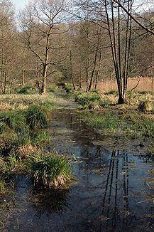 Gelderner Fleuth httpsuploadwikimediaorgwikipediacommonsthu